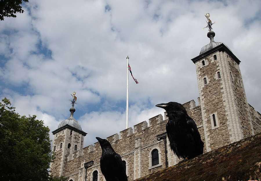 افسانه ی کلاغ های برج لندن