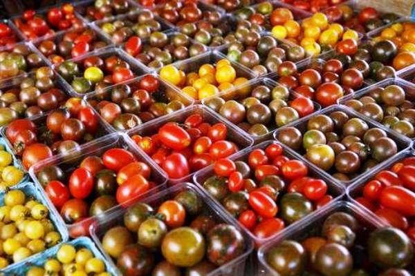 احداث اولین مرکز تحقیقاتی گوجه سیاه در کشور