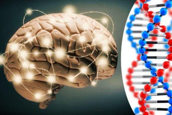 کشف ۴۰ ژن جدید مرتبط با هوش در انسان