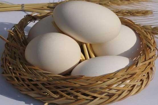 چگونگی تشخیص فساد تخممرغ
