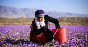 Saffronزعفران- روند بازار
