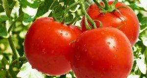 قیمت گوجه فرنگی