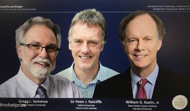 برندگان جایزه نوبل پزشکی ۲۰۱۹ معرفی شدند