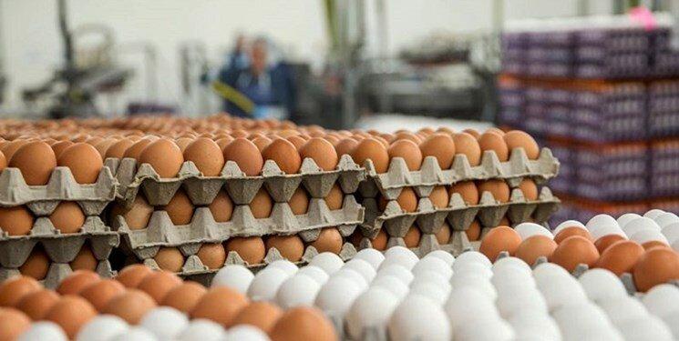 قیمت تخممرغ بستهبندی تعیین شد