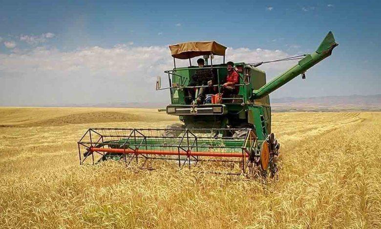 دولت اقدام غیرقانونی خود درباره نرخ گندم را اصلاح کرد